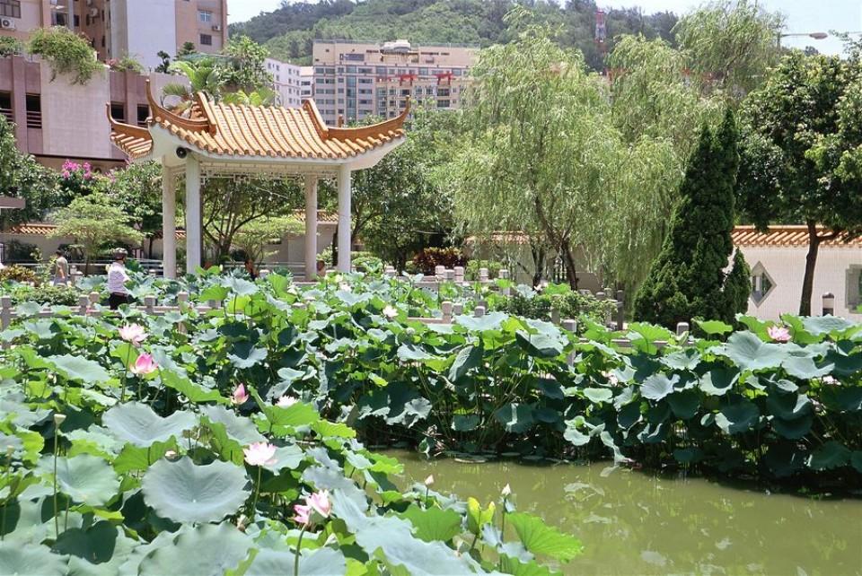 flores cidade jardim:Jardim Cidade das Flores