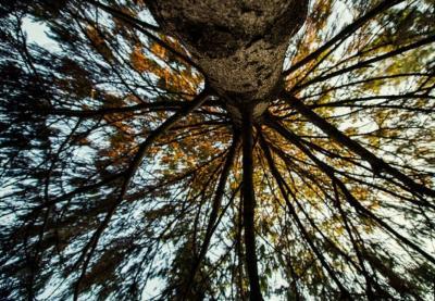 Estão de regresso as visitas guiadas à Rota das Árvores do Porto