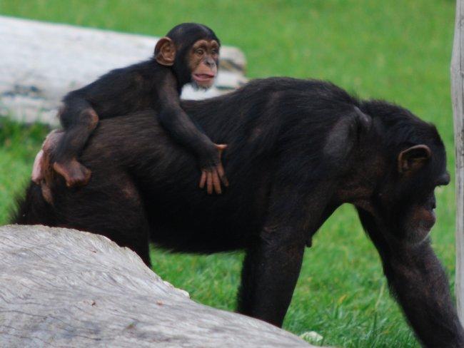 fotos jardim zoologico lisboa:Jardim Zoológico de Lisboa – Lisboa – Parques e Jardins