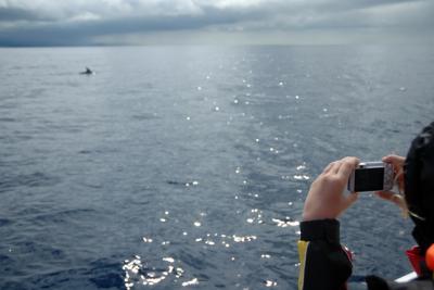 Ponta Delgada Marina Velha - Observação de Cetáceos